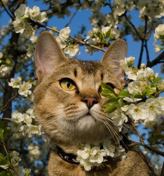 Cat Spring 4